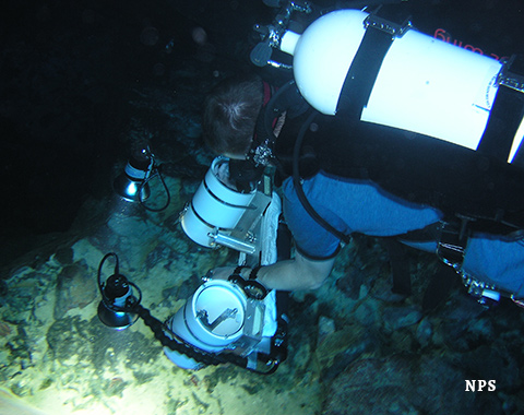 A diver measures fish with a stereo video camera.